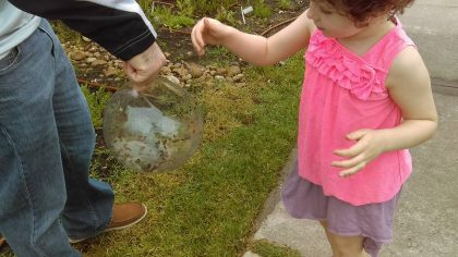 Children releasing lady bugs in our pocket prairie
